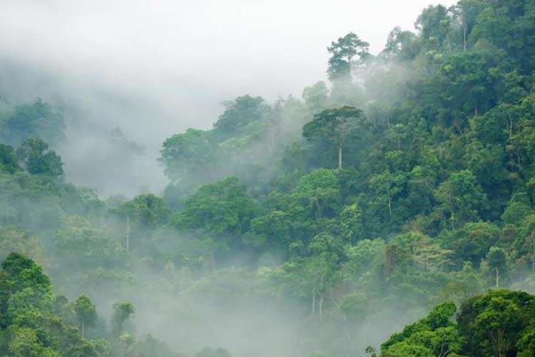 جنگلها: راهکاری سریع و زودبازده برای مقابله با تغییرات اقلیمی