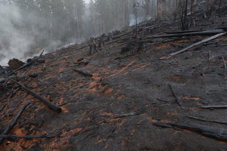 خاک آسیبدیده از آتشسوزی و قطع درختان، به قرنها زمان برای احیا نیاز دارد