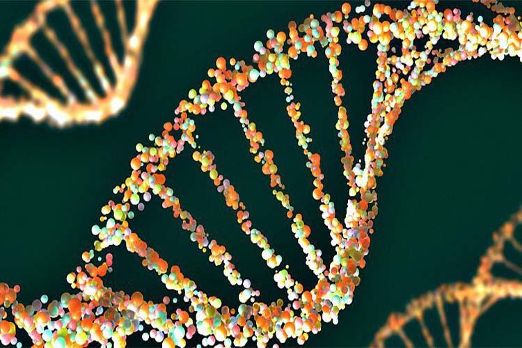 ساخت اولین ژنوم باکتریایی با استفاده از کامپیوتر